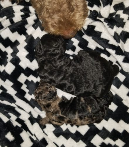 Puppy Growth Charts and Calculators – How Big Will My ...