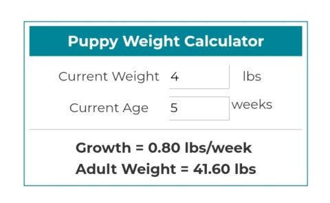 Labradoodle Weight Chart Picturesso