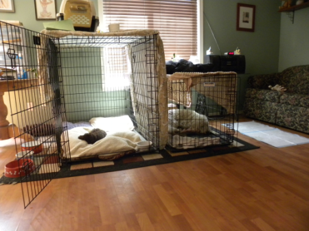 Our Dog area in our Living room..