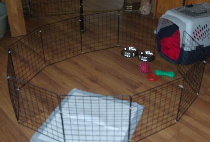 Crate Training 9