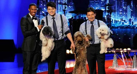 Two Labradoodles and a Poodle accept their Championship at America's Got Talent!