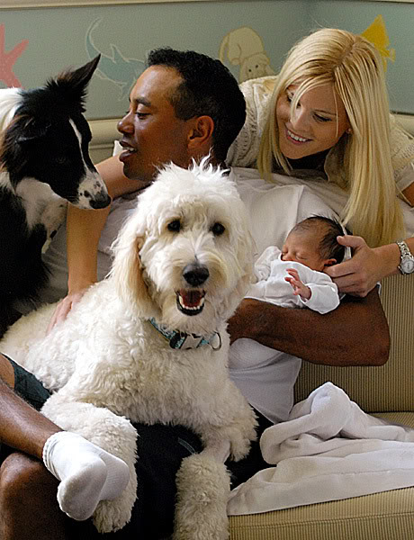 Best Food For Puppies >> About Goldendoodles- Aussiedoodle and Labradoodle Puppies ...