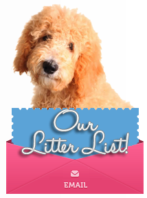 Litter Notification List