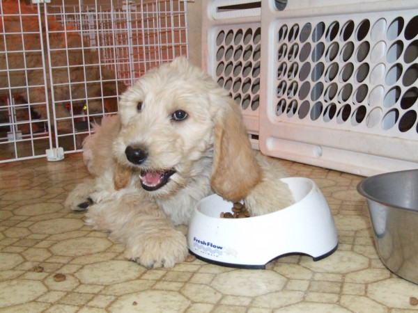 Housebreaking A Puppy A Time Proven Potty Training