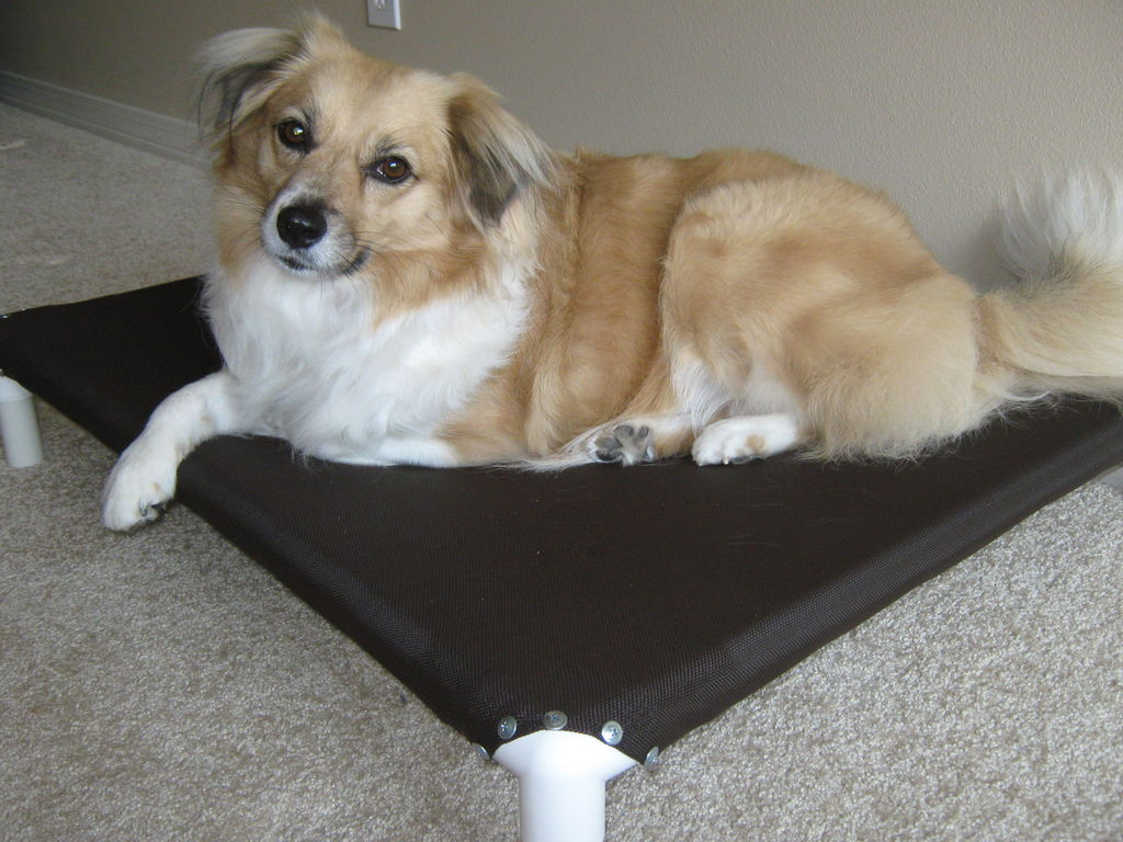 DIY – How to make NO-SEW elevated dog beds out of PVC ...
