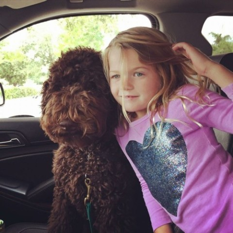 Dreamydoodles Welcome Home Puppy Packet!- Aussiedoodle and Labradoodle ...