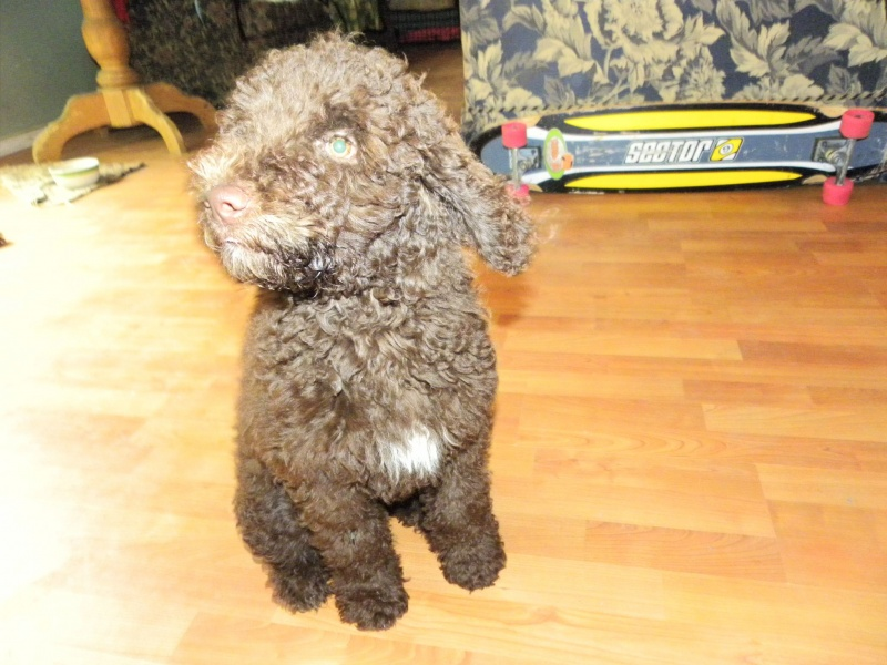 Puppy Growth Charts And Calculators How Big Will My