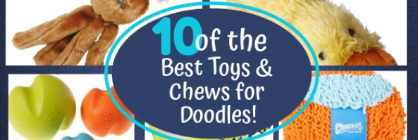 TOP 10 Best Dog Toys & Chews For Doodle Puppies!