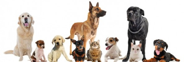 Natural Ways for Getting Rid of Dog Fleas