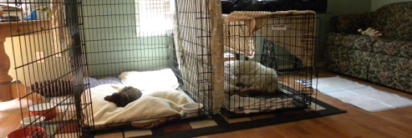 How to Stop Puppy Whining, Crying and Howling when Crate Training