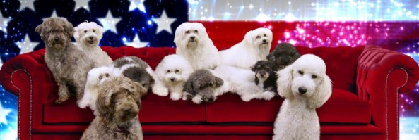 The Olate Labradoodles – America's Got Talent 2012