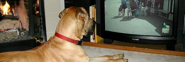 Do you think dogs can enjoy television?