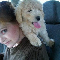 Me and Multigen Labradoodle Honey going for a ride