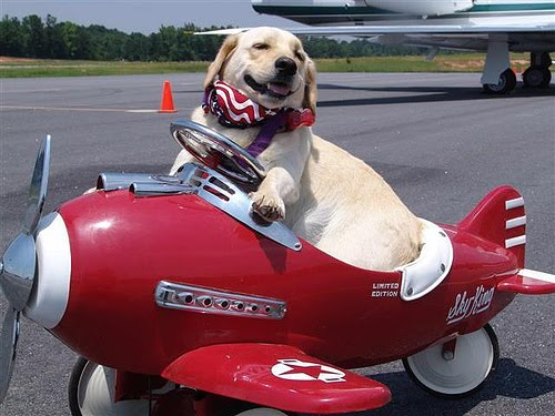 dog air travel