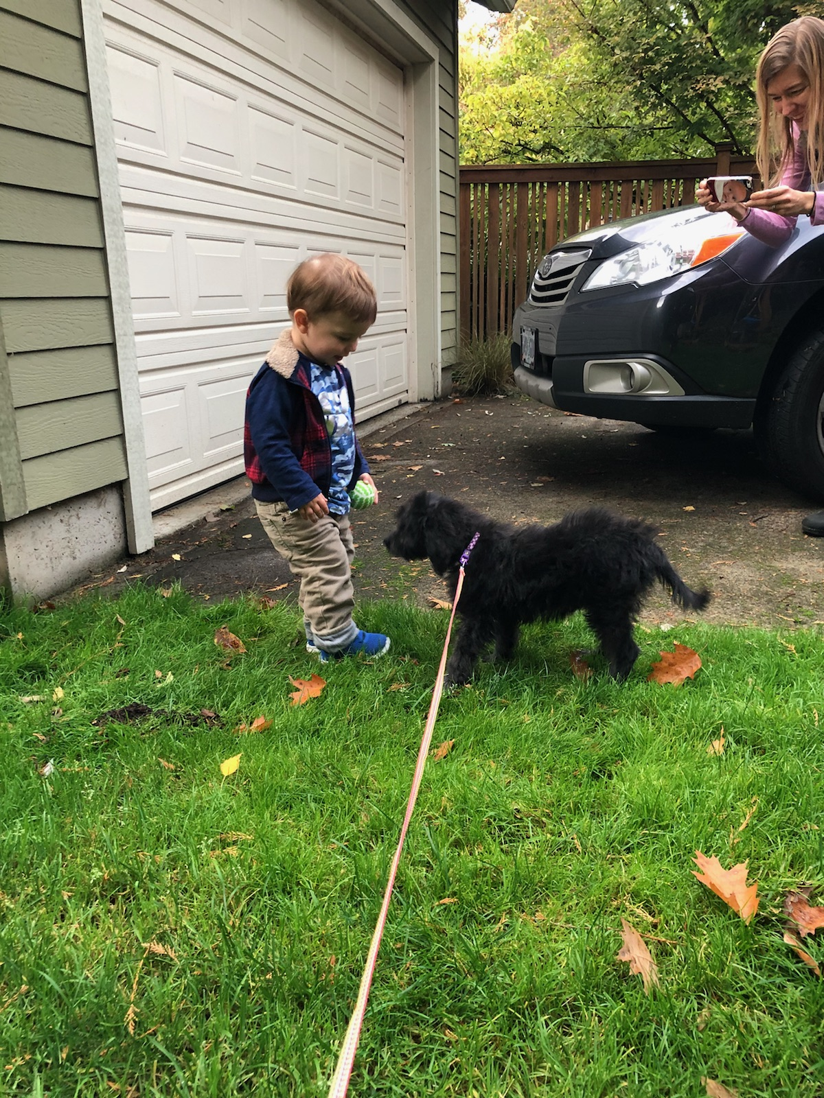 POTTY TRAINING AN AUSSIEDOODLE PUPPY - 7 DAY CRATE TRAINING SCHEDULE- BLACK MULTIGEN LABRADOODLE PUPPY ON A LEASH
