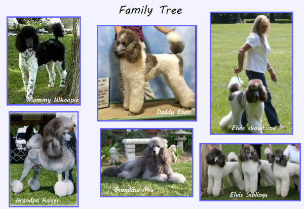 Alex's Family Tree