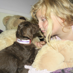 My Daughter Olivia and a Chocolate Aussiedoodle Puppy!