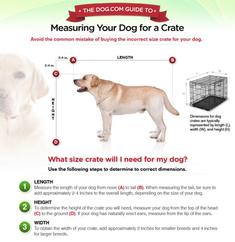 How to Measure your Dog for a Dog Crate