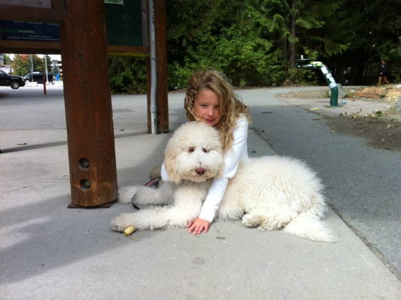 Lily - Multigen Labradoodle from Maddie and Hershey's Valentines day Litter