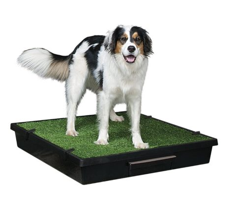Pet Supplies New Puppy Pet Lawns