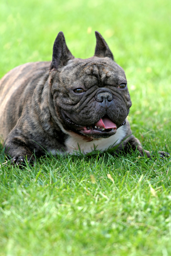 The Importance Of Early Puppy Socialization And The Different Stages Of Puppy Development
