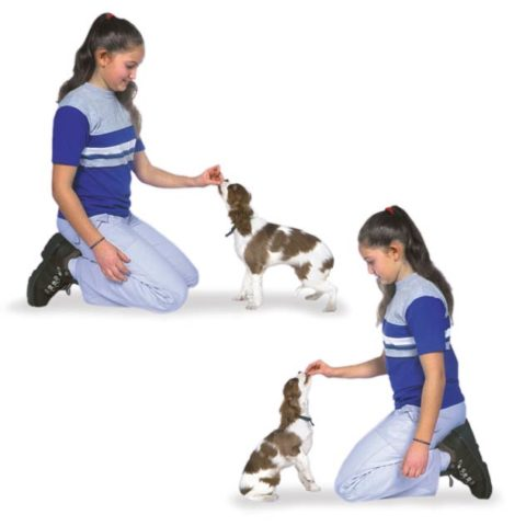 TRAINING PUPPY THE SIT COMMAND WITH HAND SIGNALS