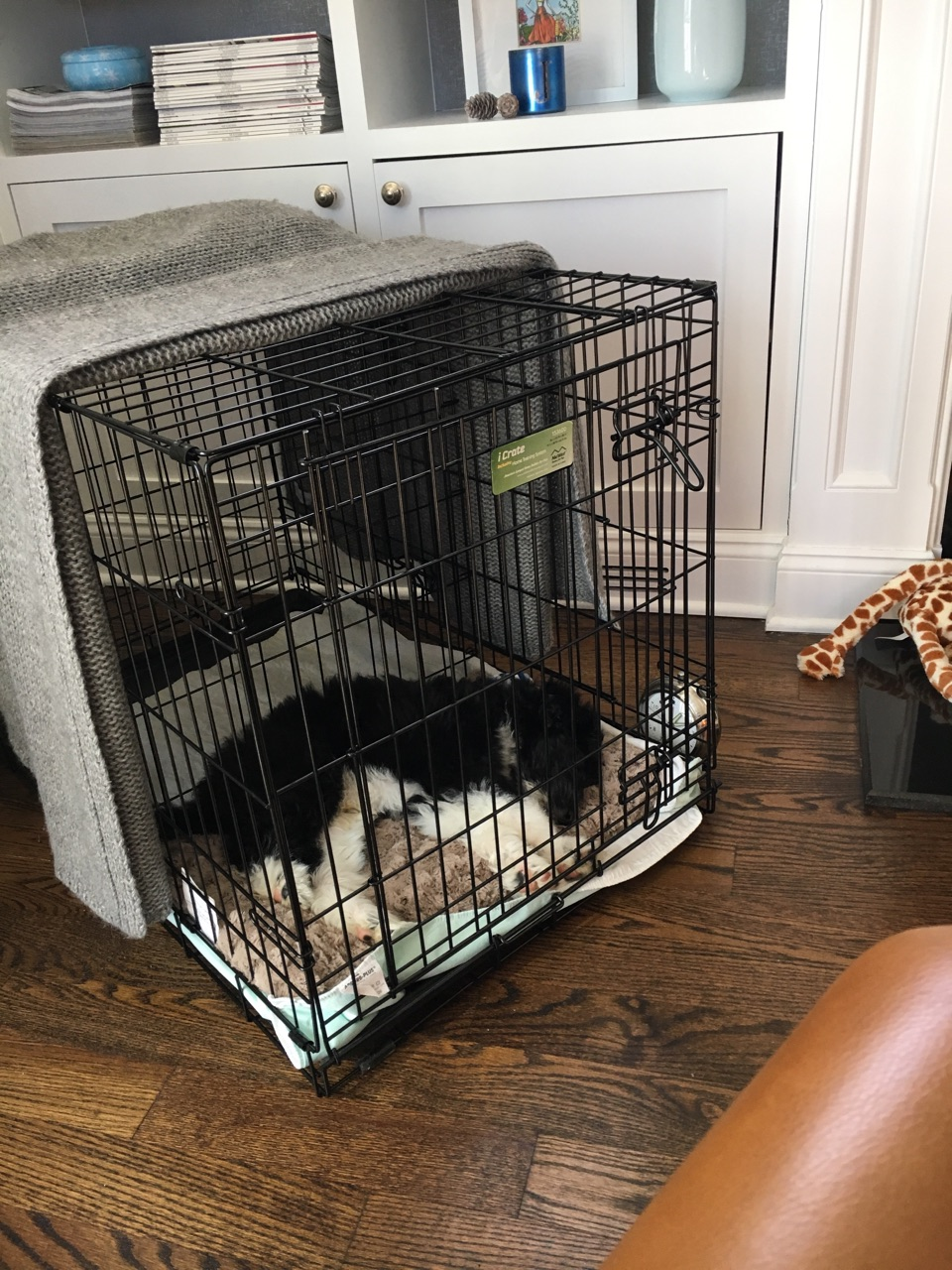 How To Potty Train Your Puppy In 7 Days Two Crate Training Schedules Mini Aussiedoodles And Australian Labradoodle Puppies Best Aussiedoodle Breeders In Washington State Portland Oregon