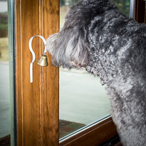 Bell training for Labradoodle and Aussiedoodle Puppies and Dogs