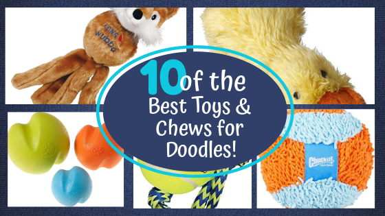 10 of the best Toys and Chews for Labradoodle and Aussiedoodle Puppies