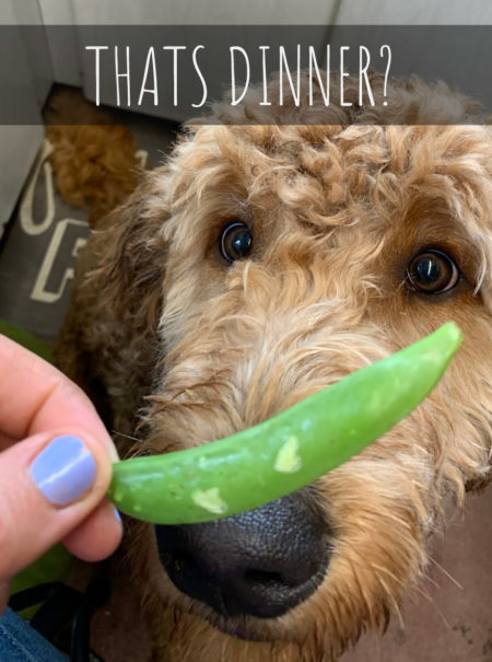 Thats Dinner - Pea and Lentil Free Dog Food List