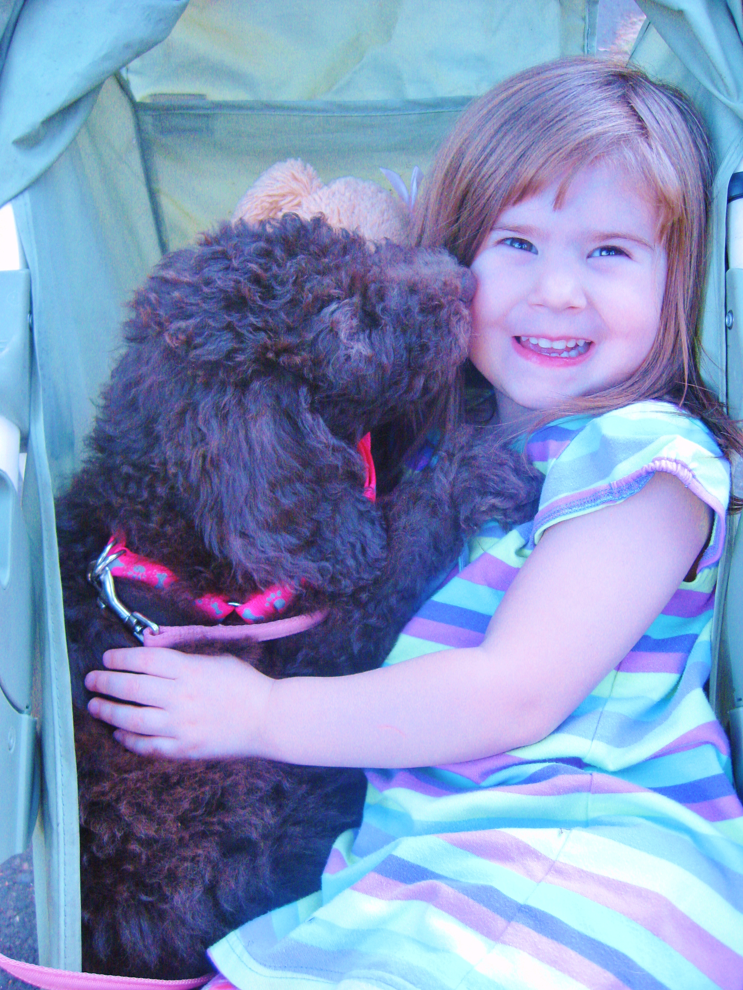Guardian Family Program Aussiedoodle And Labradoodle