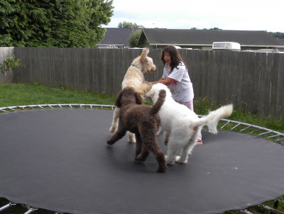 My daughter and Doods on the Trampoline