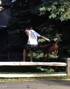 "Reece - Daisy's Labradoodle daughter jumping the fence with her ""boy""! Such an awesome picture!!"
