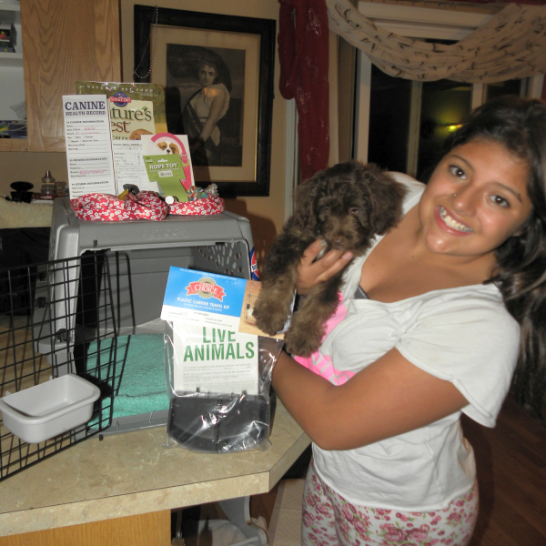 My daughter and me getting a Mini Aussiedoodle puppy ready to fly in cargo…